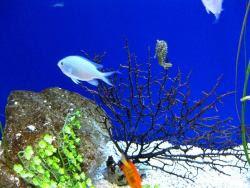 sfondi mare e pesci 24