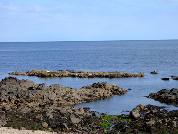Basking seals at Keil Beach