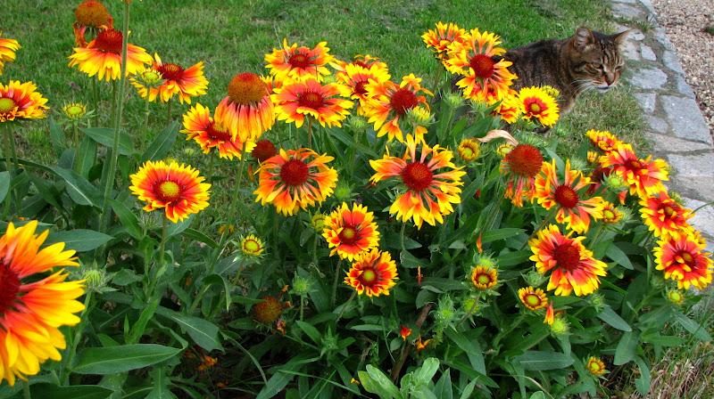 l 39 orto dei colori fiori estivi