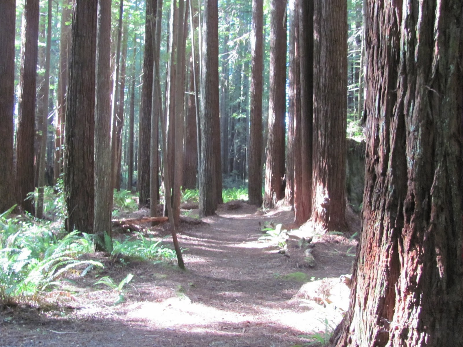 A path leads through the small redwood grove at Florence Keller County Park, California