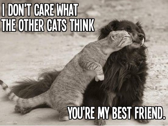 cute and funny pictures and more dog and cat best friends