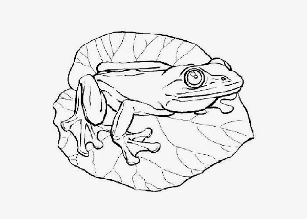 baby frog coloring pages - photo#23