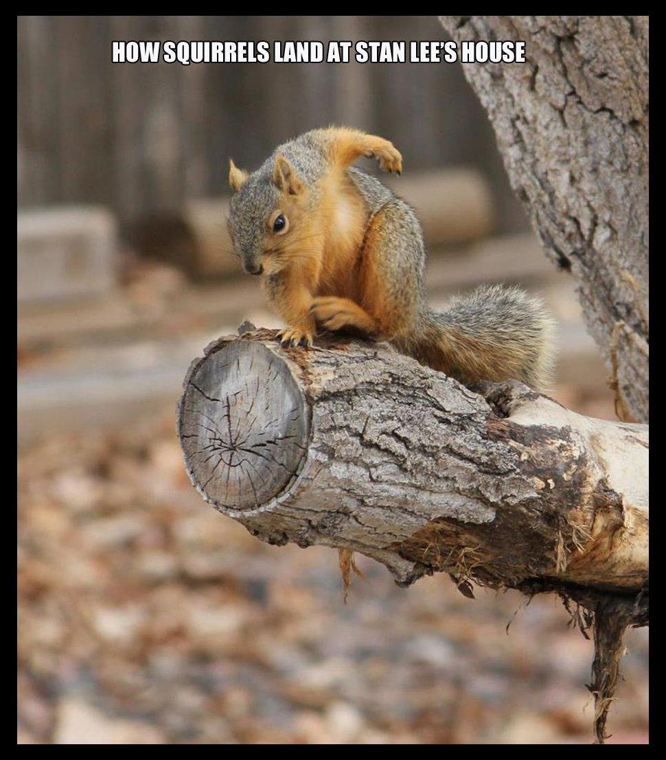 Spider Squirrel - YouTube