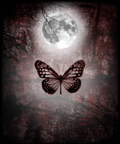 Gothic Butterfly The Gothic Butterfly: ...