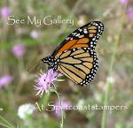 My SCS Gallery