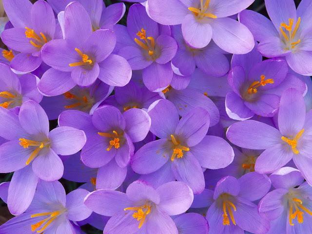 hoa dep nhat viet nam , hoa dep nhat the gioi,  anh ảnh hoa đẹp , cam hoa dep