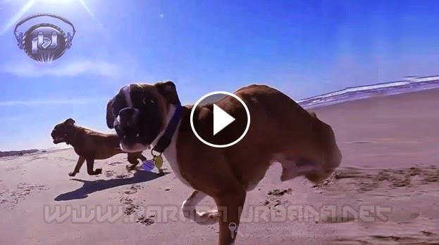 VIDEO ASOMBROSO - Felicidad total para este perro de dos patas ve la playa por primera vez en su vida