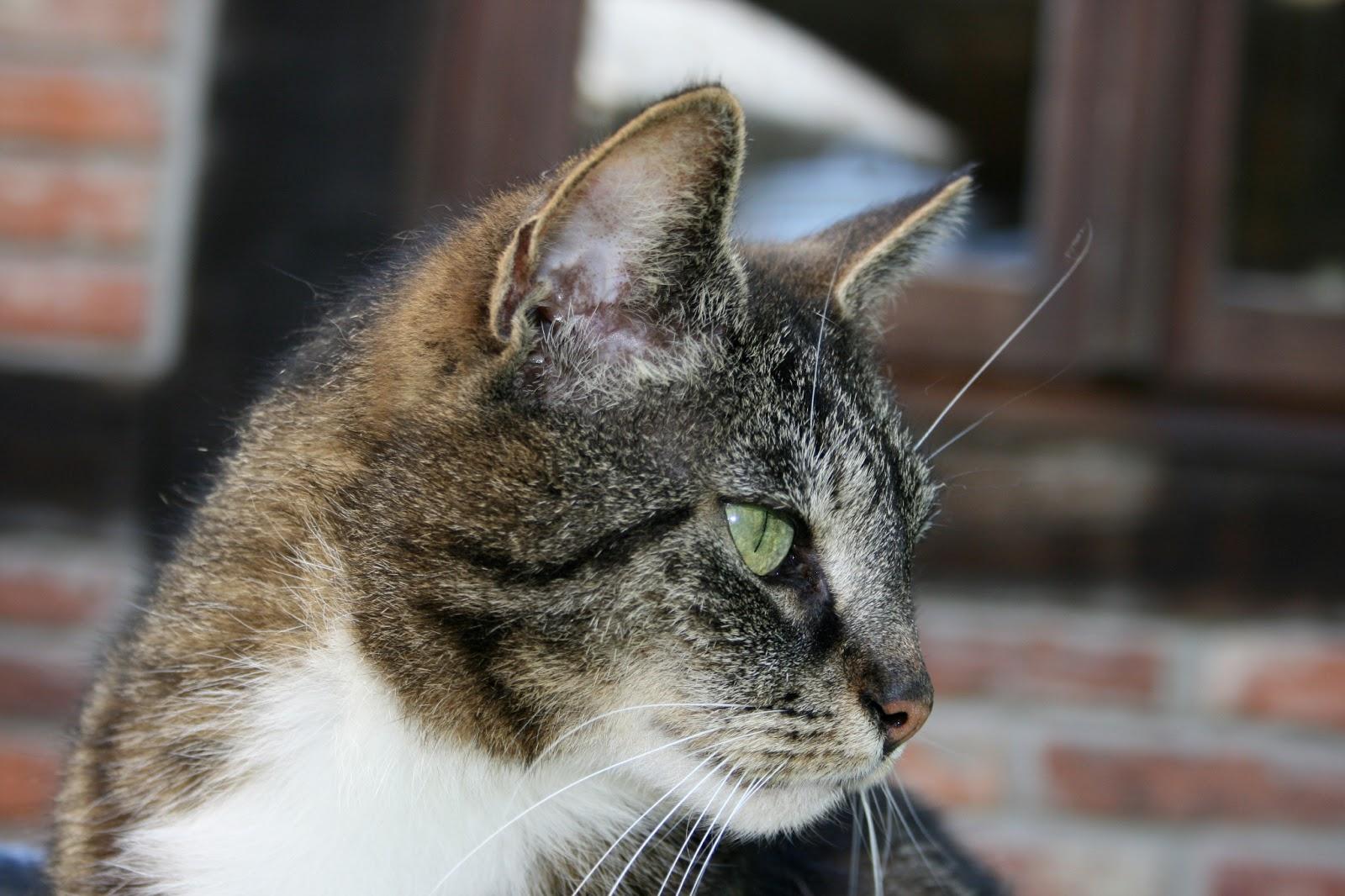 Schön Katze 5 Draht Diagramm Bilder - Der Schaltplan - greigo.com