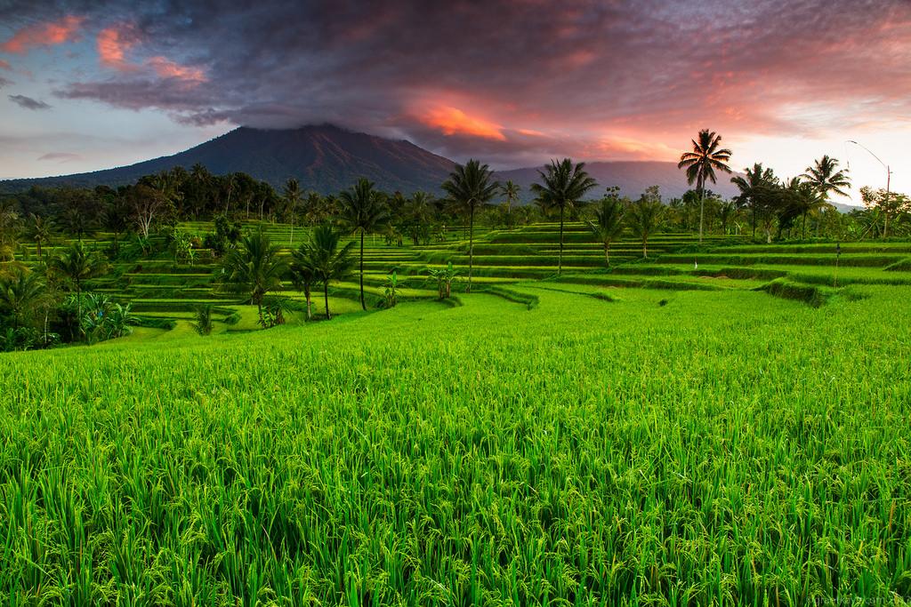 Agrowisata Coklat Bali