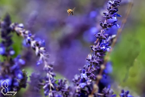 https://www.etsy.com/listing/163352635/purple-bee-fine-art-photography?ref=favs_view_3