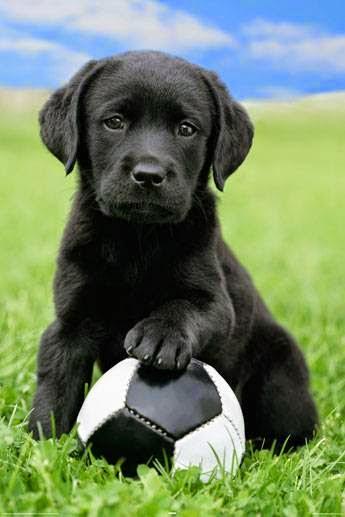 Les chiens ont besoin de jouer