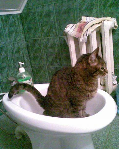 Что делать если кот писает на дверь