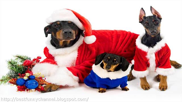 Christmas dogs.