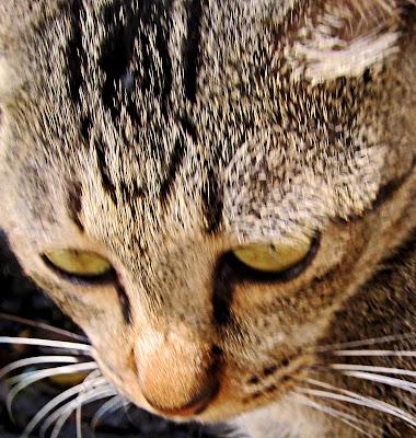 cat's face or portrait