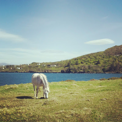 Horse grazing on Valentia Island, Ireland. Photo by Elena Rosenberg