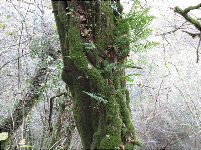 tronco verde