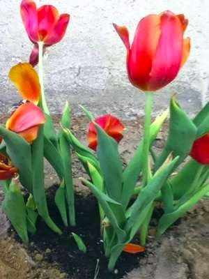 Of Flowers and Failures: Spring Gardening Tips for Beginners