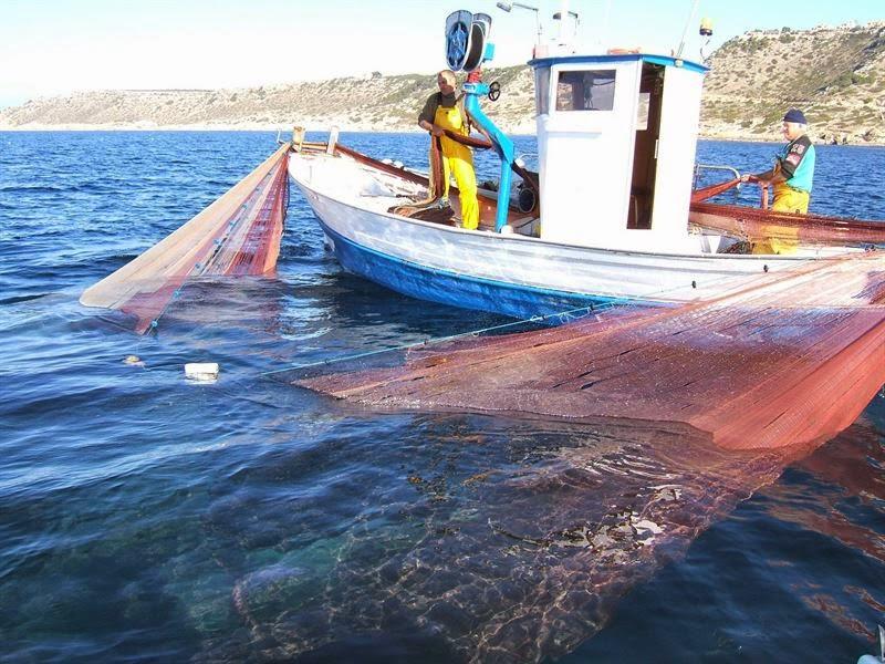 Pesca jonquillo chanquetes Mallorca 2014