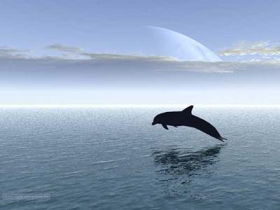 Golfinho pede ajuda a mergulhador
