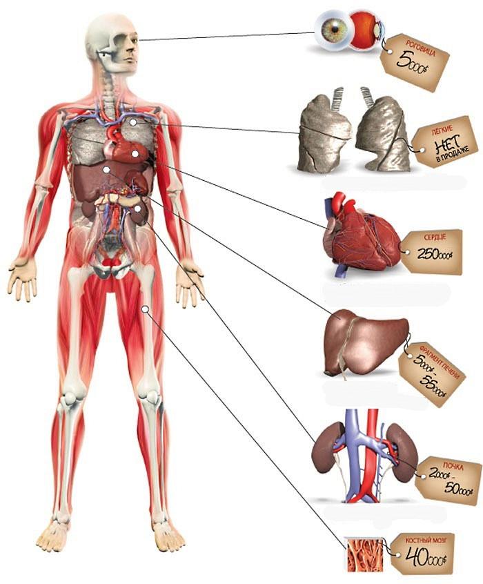 Симптомы беременности увеличение груди и появление ориолов в картинках