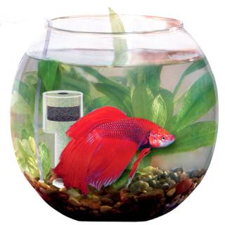 http://www.risunoc.com/2015/11/reshili-kupit-domoy-akvarium-chto-nuzhno-ob-etom-znat.html