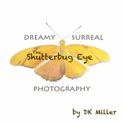The Shutterbug Eye on Etsy