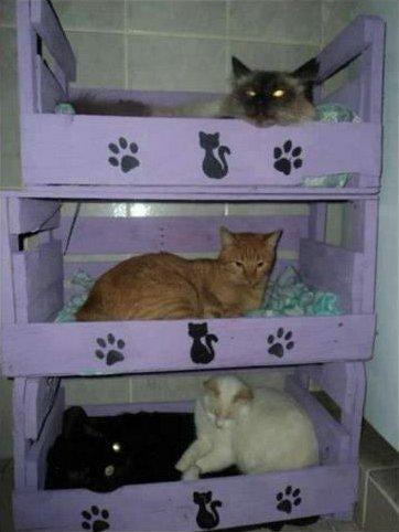 Reciclamobel cama para gatos for Cama para gatos