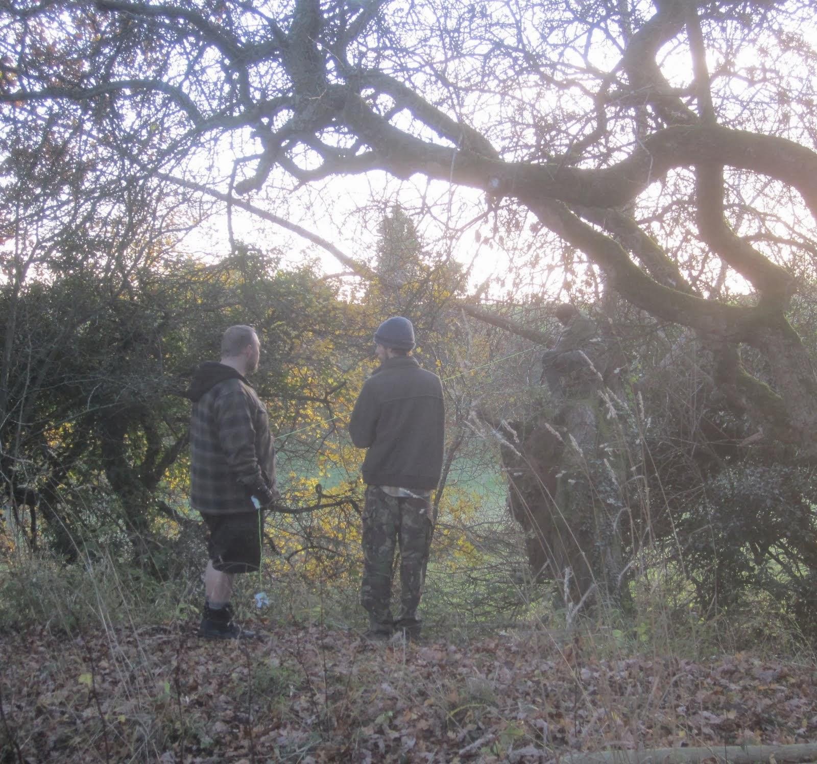 Pollarding willow