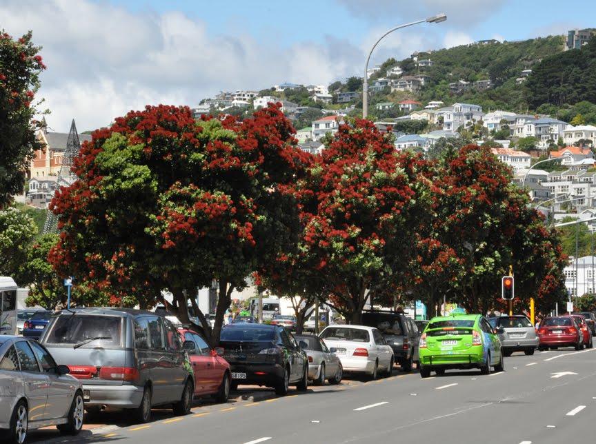 NZ Christmas Trees