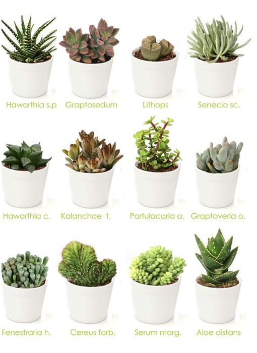 Mi remanso de paz jardineras caseras para plantas - Como transplantar cactus ...