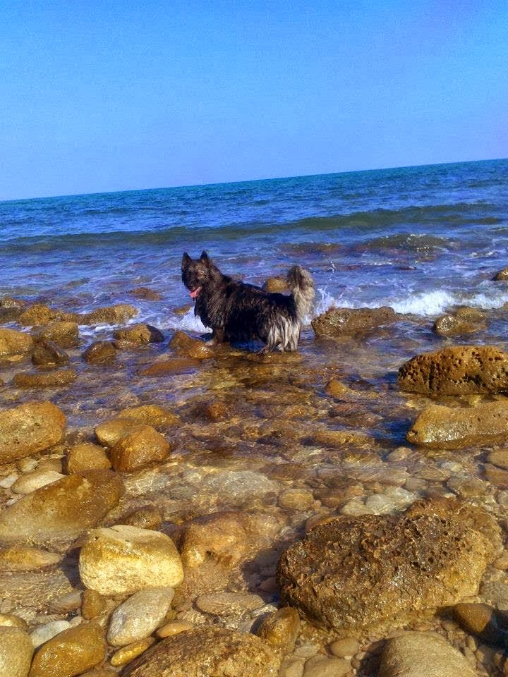 el campello dog beach