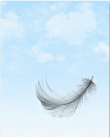 Feather Flying in the Sky