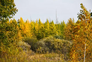 photo of peak tamarack color?