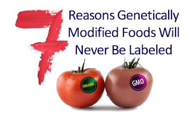 genetic modified food essay Advantages and disadvantages of genetically modified organisms biology essay print reference this published: 23rd march, 2015 disclaimer: this essay has been.