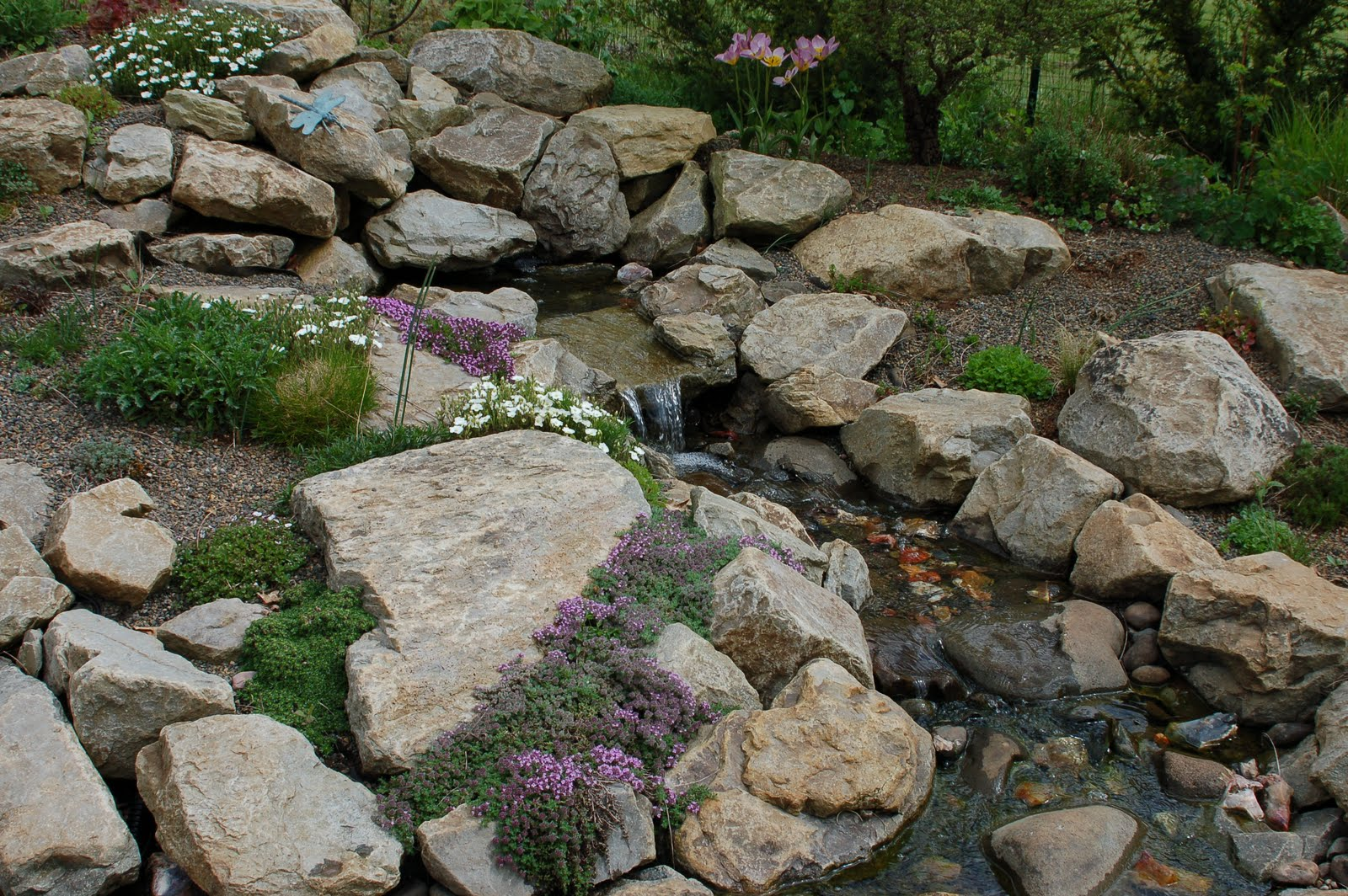 Wild ginger farm news blog crevice plants Small rock garden