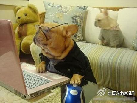 professor doggy