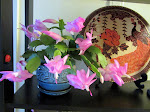 Christmas cactus