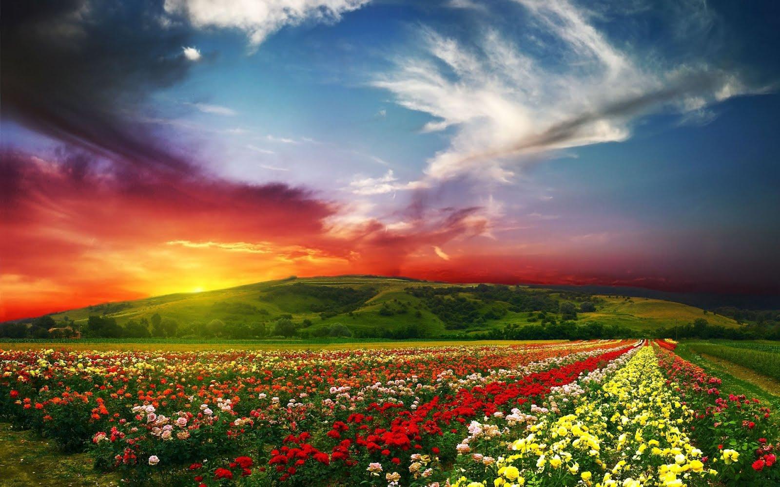 http://3.bp.blogspot.com/-TrN1mSDJekA/Tz1o_HfTHGI/AAAAAAAAwqs/W_0eVg0Pl8w/s1600/lovely-nature-landscape-1920x1200-campo-de-flores-paisaje.jpg