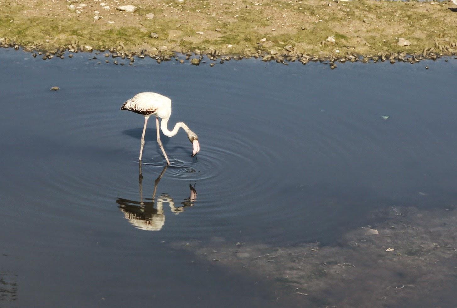 Mandvi, Kutch, Gujarat, Gujarat Tourism, Bhuj, Flamingos