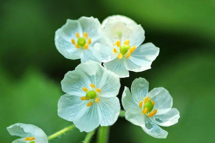 تبدأ الزهور في فقدان اللون تدريجيا