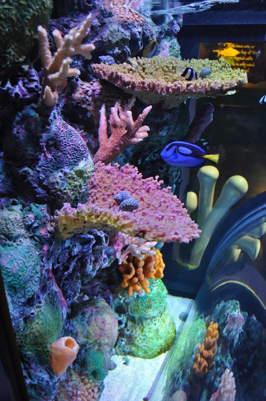 the brady family at the new sea life aquarium in kansas city. Black Bedroom Furniture Sets. Home Design Ideas