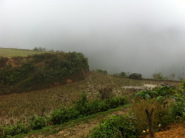 Sa Pa padi fields