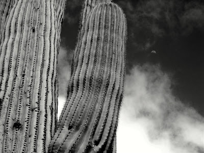 Arizona, cactus, contrast, moon, photoshop