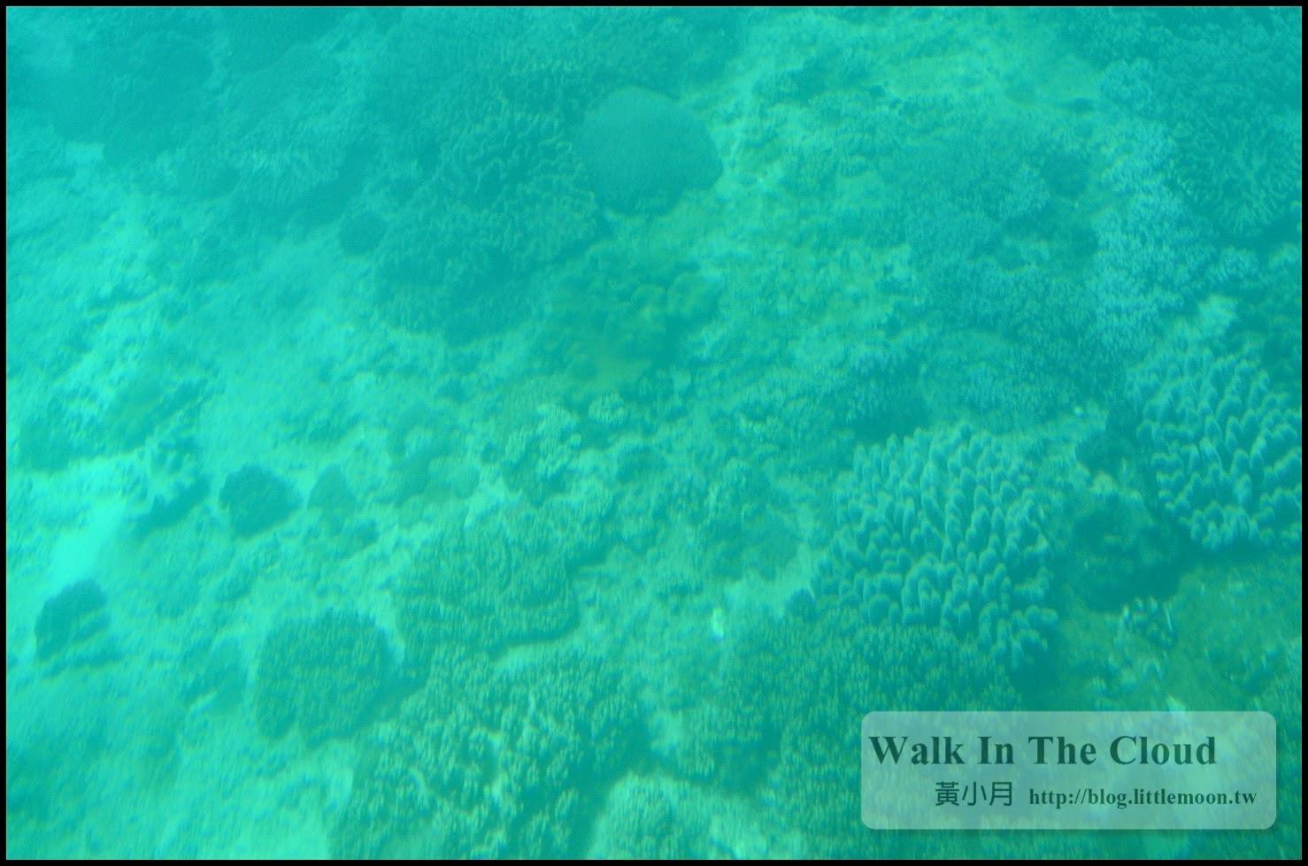 半潛艇下觀看海洋生態