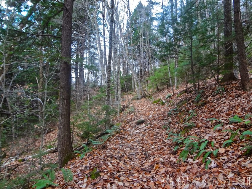 Hiking in the woods near Cardigan Mountain in New Hampshire