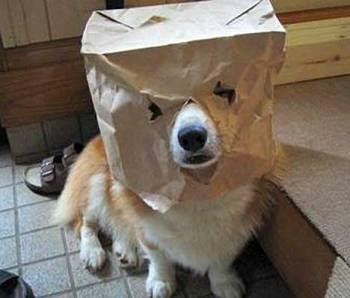 smiješne slike psi