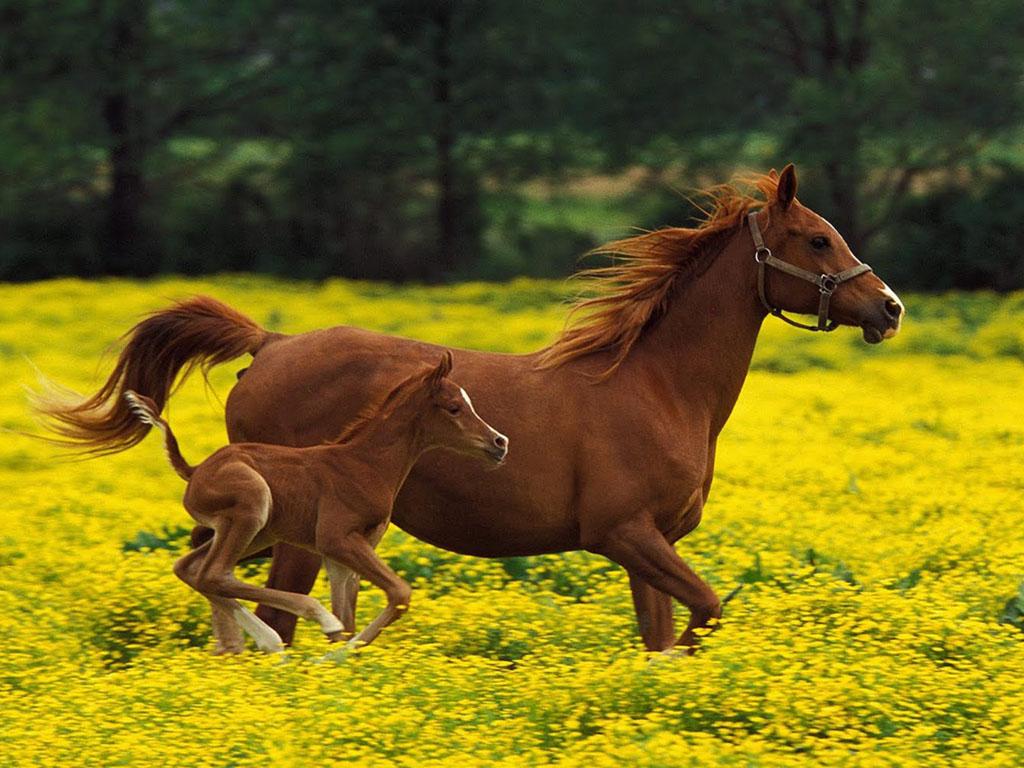 Gambar gambar binatang