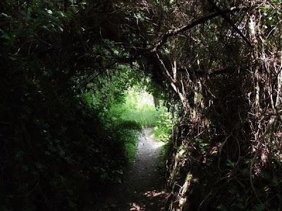 jardines perdidos de Heligan (Lost Gardens of Heligan)