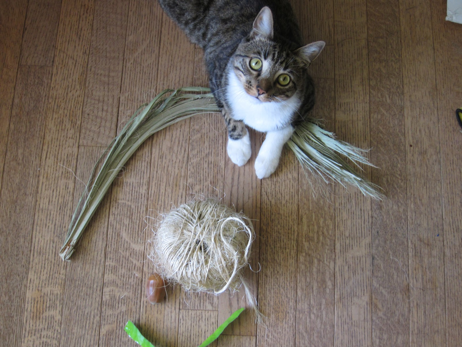 homemade cat toys root simple