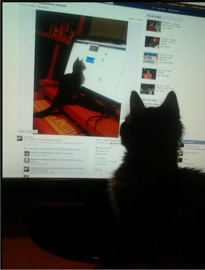 Funny cat pictures, inception cat, cat pictures, cute cat pictures